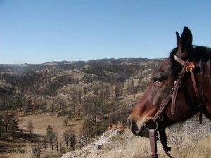 A good horse overlooking new country